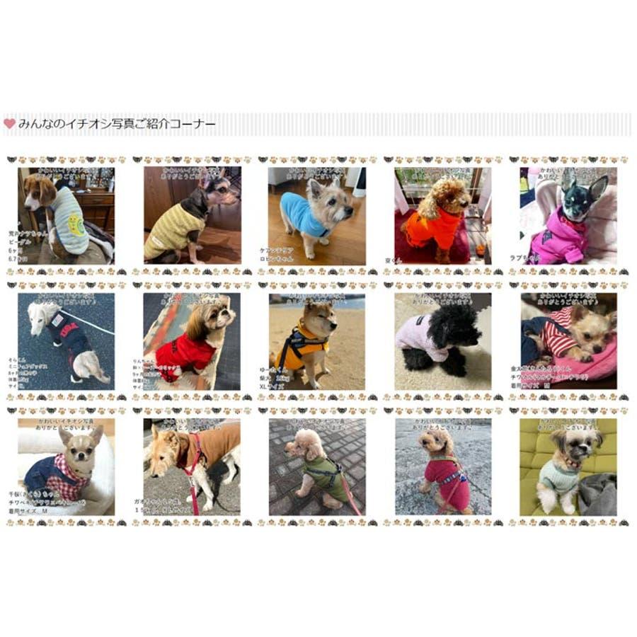 犬 服 犬服 10