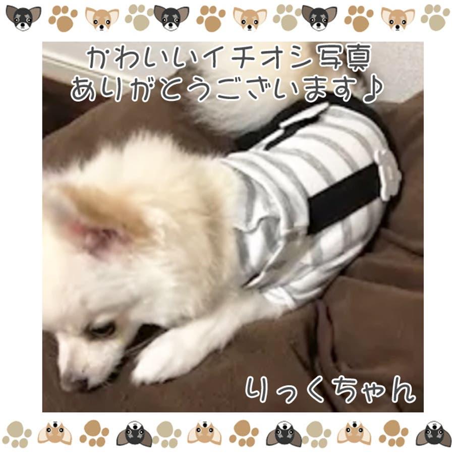 犬 服 犬服 7